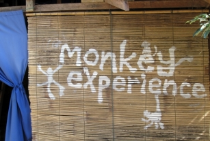 "Monkey Experience 2011 Acrylic on Shade Cover 36""x 72"" Painted at the Spicy Laos Hostel in Vangvien, Laos"